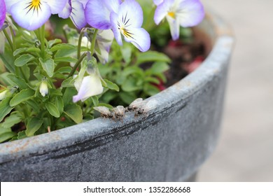 Flying ants on flower pot. & Flying Ant Day Images Stock Photos \u0026 Vectors   Shutterstock