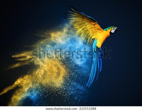 Fliegender Ara-Papagei auf bunter Pulverexplosion