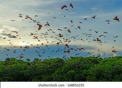 Flying bats in the blue sky