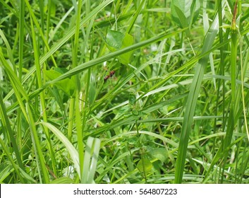 flying bee on a green background
