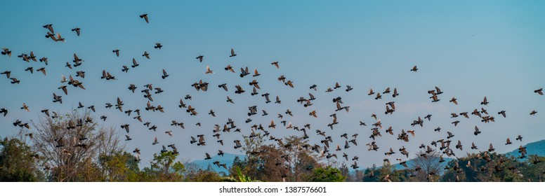 Flying big flock of pigeons against blue sky panoramic shot