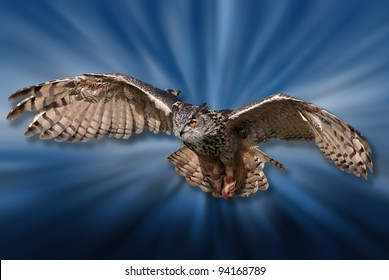Flying bird of pray isolated on cool motion blur background.