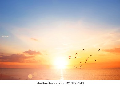 Flying bird at sunset sky background