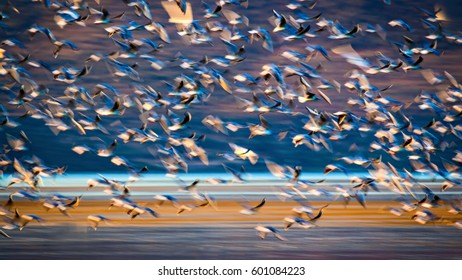 Flying birds. Abstract Motion Blur Background