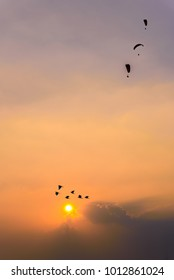 Flying birds against a sunset sky