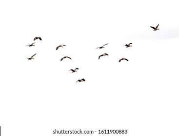 The flying birds and background.