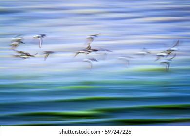 Flying birds. Fine art landscape nature photography. Blue nature background.