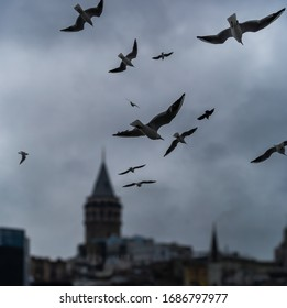 Flying birds and Galata tower view