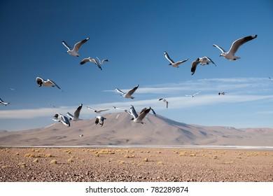 Flying birds over desert