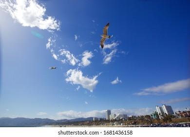 flying birds and sky and beach in santamonica, California , USA