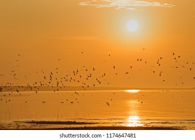 Flying birds at sunrise over the Wadden Sea at Schiermonnikoog, the Netherlands