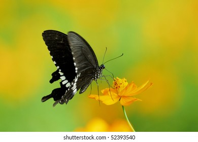 a flying black butterfly