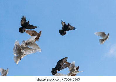 Flying black and white doves on a blue sky background