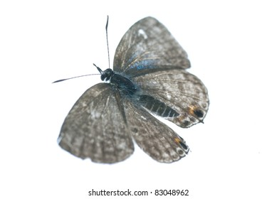 a flying butterfly isolated