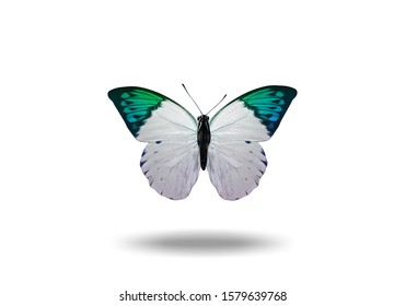 flying colored butterfly with a shadow from below. isolated on white background