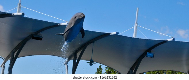 Flying Dolphin is a widely distributed and diverse group of aquatic mammals. They are an informal grouping within the order Cetacea, excluding whales and porpoises