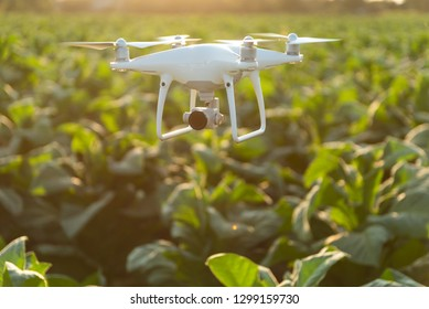 Flying drone above the tobacco garden field. concept  drone survey in agriculture