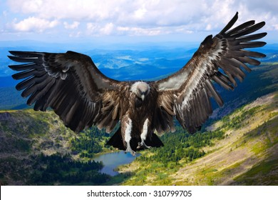 Flying eagle against   mountains background