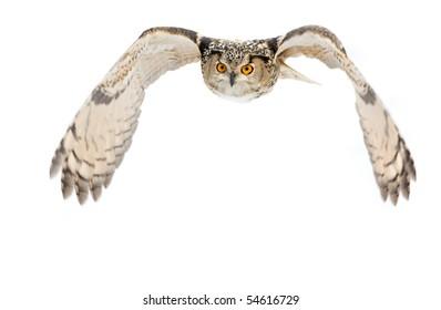 flying eagle-owl