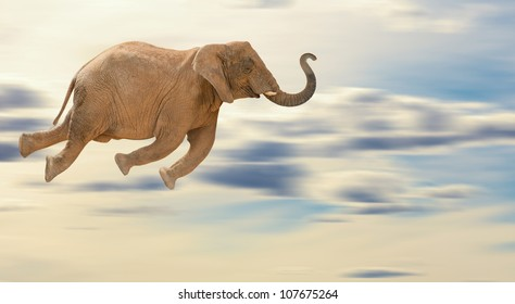 Flying Elephant, Outdoor