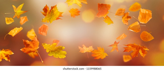 flying fall leaves on abstract backround