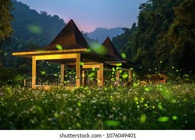 Flying fireflies in taiwan
