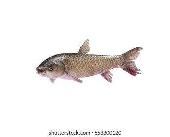 flying Fish isolated on white background