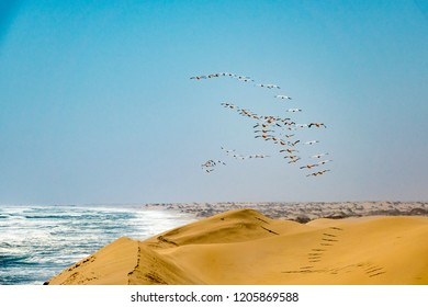 The flying flamingos in Walvis Bay, Namibia.