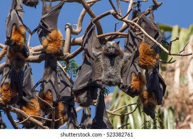 Flying Fox up the wrong way