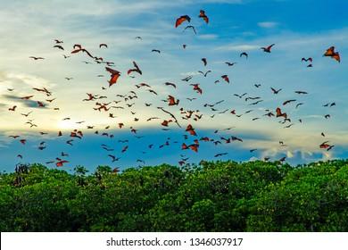 Flying foxes (bats) in the blue sky near Komodo Island. Indonesia.