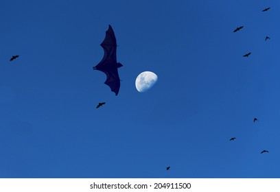 Flying Foxes and the Moon. Fruit bats, also known as flying foxes leave the tropical Indonesian island of Satonda at sunset during a half moon looking for food on a nearby island.