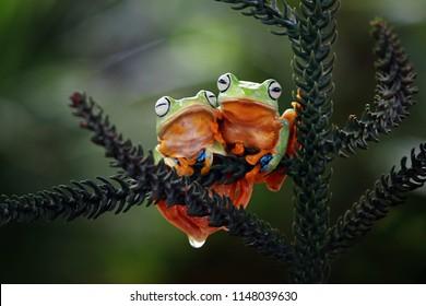 Flying frog sitting on branch