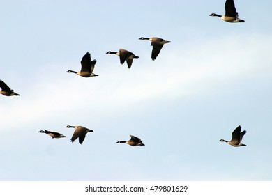 Flying geese in V formation