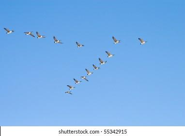 Flying geese in v shape