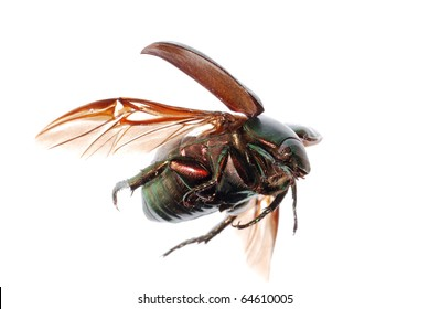 Flying Insect Images, Stock Photos & Vectors | Shutterstock