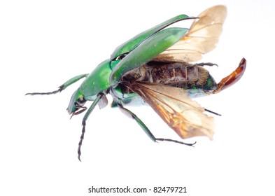 Flying Beetle Images, Stock Photos & Vectors   Shutterstock