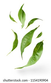 flying green tea leaves isolated on white background. Food levitation concept, high resolution