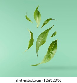 flying green tea leaves isolated on turquoise background. Food levitation concept, high resolution