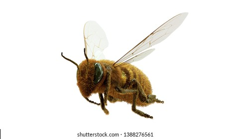 flying honey bee,You can see the enhanced detail and realism, so you can use this for a closeup shot