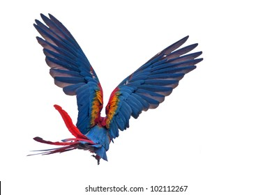 Flying macaw parrot - isolated on white background