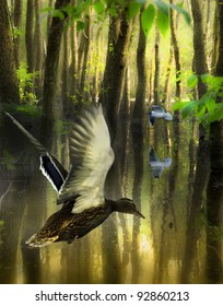 flying mallard/secret forest/ flying birds in mystical flooding forest.Location Lodz,Poland