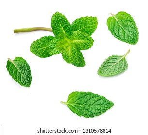 Flying Mint leaves isolated on white background. Fresh Spearmint, peppermint leaf