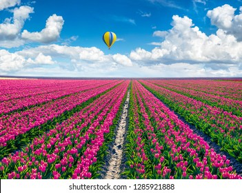 Flying on the balloon over the field of blooming red tulip flowers. Picturesque spring scene in the Netherlands countryside. Artistic style post processed photo.