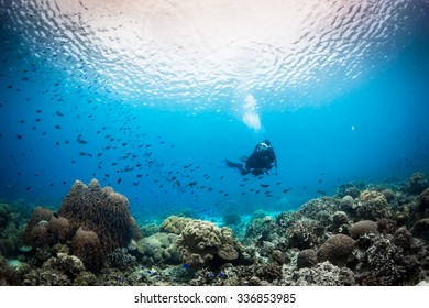 flying on the coral