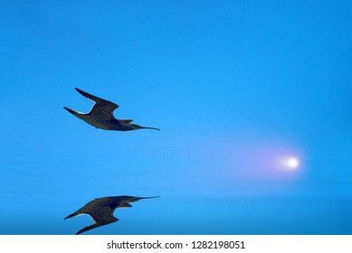 Flying on screen. Drawing of bird that flies over still water on foggy evening and rising moon Whimbrel (Numenius phaeopus) over mirror of water, plane reflection