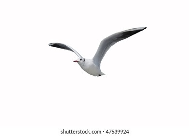 Flying One seagull isolated on the white background.