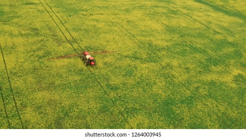 Flying Over the Field With a Canola. Agriculture Tractor Spraying Summer Crop Wheat Field