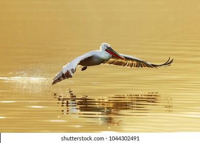 Flying over gold lake