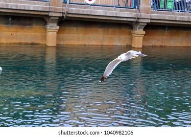 Flying over port