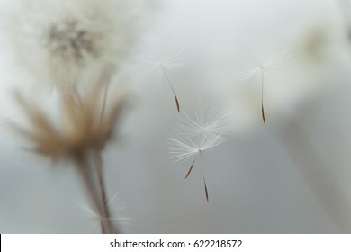 Flying parachutes from dandelion